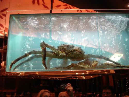 Giant Alaskan crab - 20081220000514.jpg
